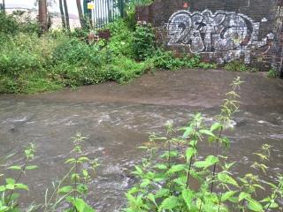 Brook after rain
